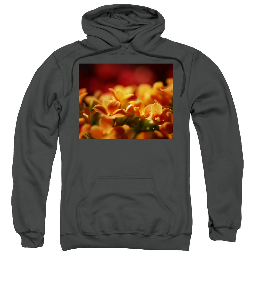Flowers Sweatshirt featuring the photograph Warm Spring Glow by Susan Capuano
