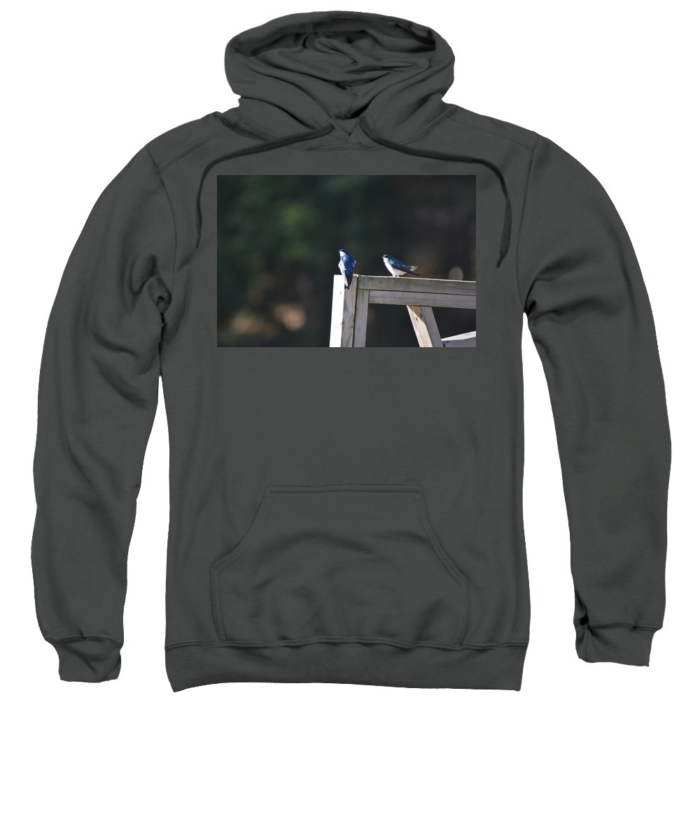 Tree Swallow Sweatshirt featuring the photograph Watching The Sky by Thomas Phillips