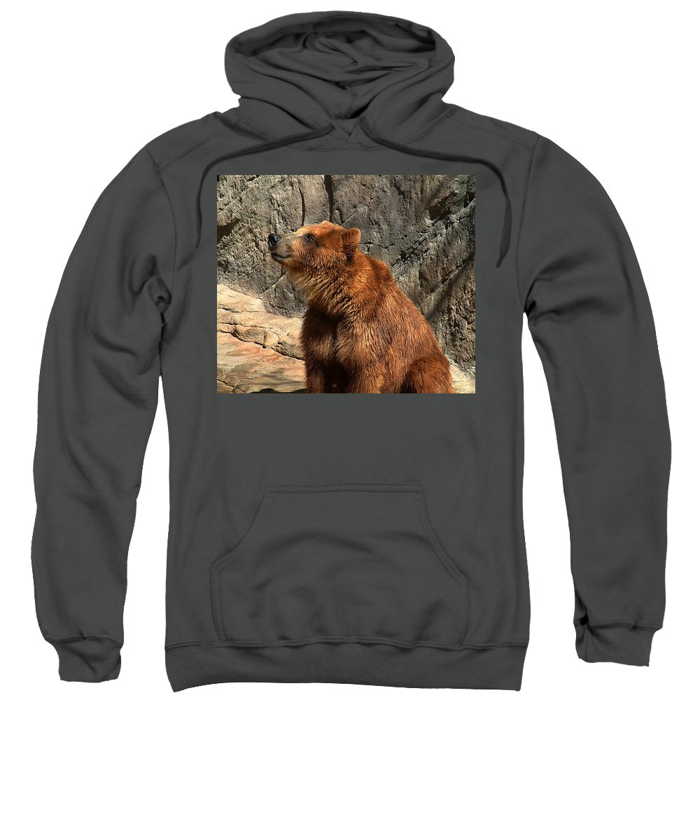 Bear Sweatshirt featuring the photograph Watching The Sun Set by RC DeWinter