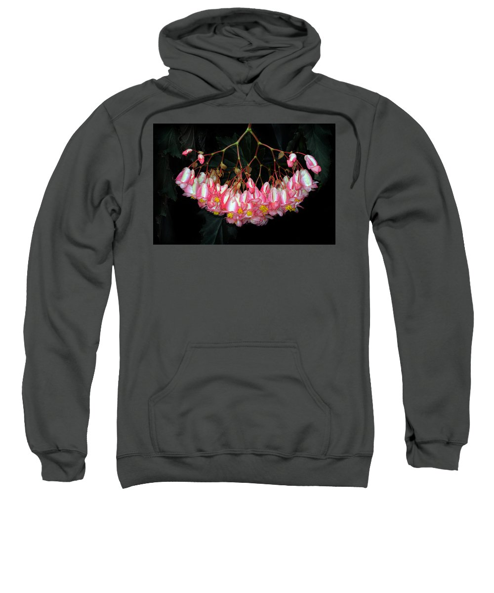 Begonia Sweatshirt featuring the photograph Wax Begonia by Dave Mills