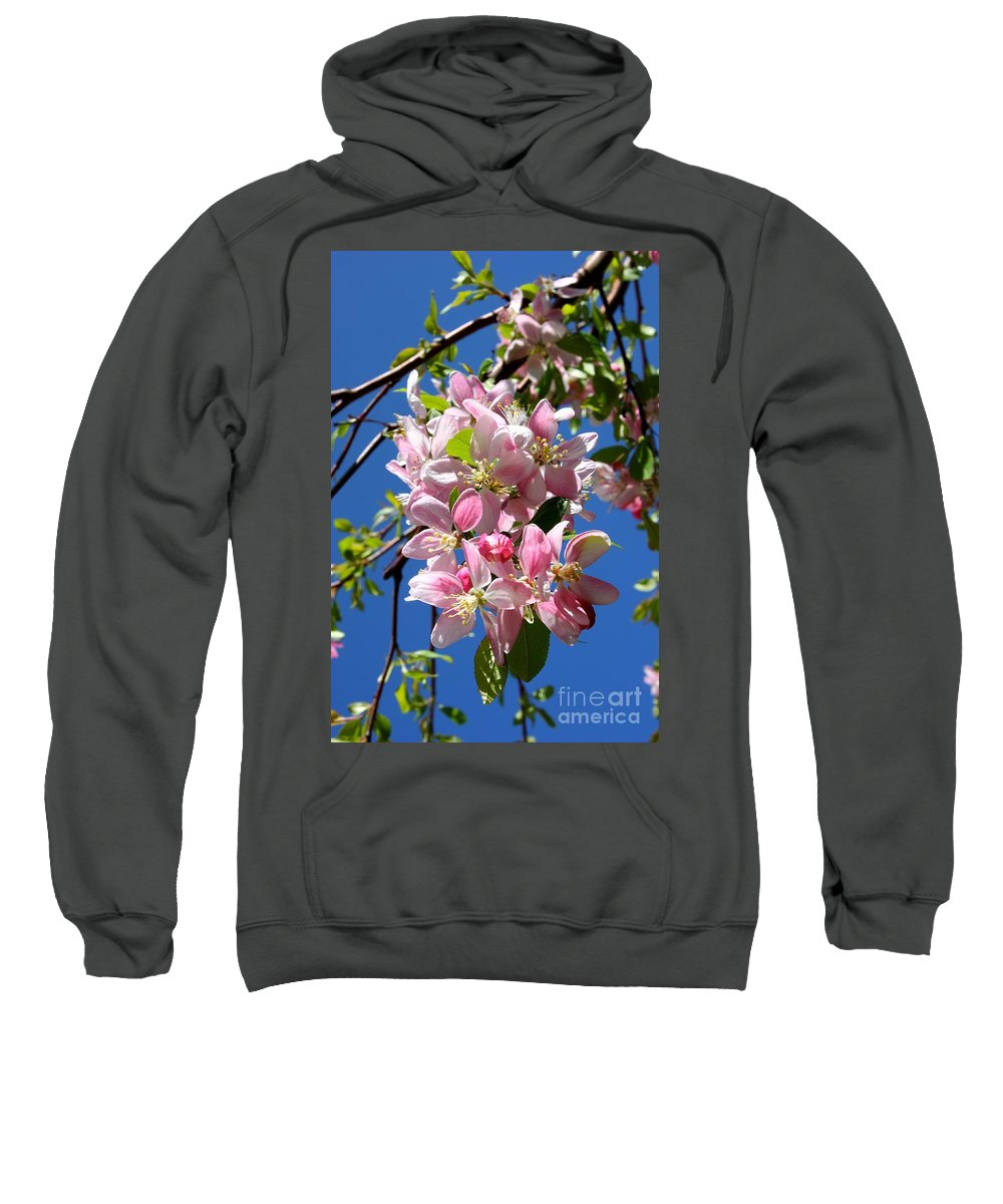 Weeping Cherry Tree Blossoms Sweatshirt featuring the photograph Weeping Cherry Tree Blossoms by Carol Groenen