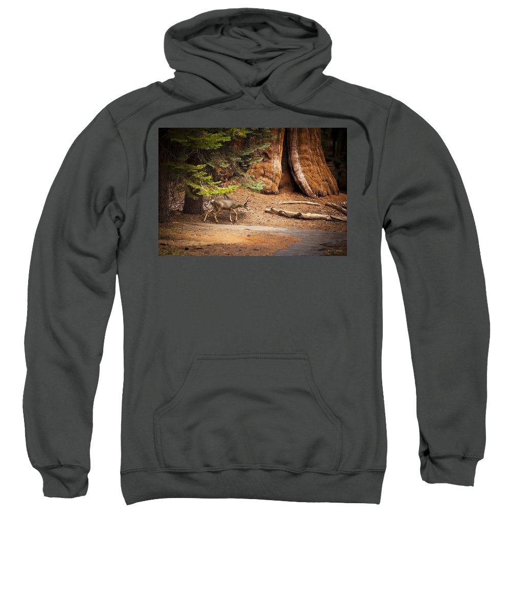 Deer Sweatshirt featuring the photograph Welcome Home - Sequoia National Forest by Angela Stanton