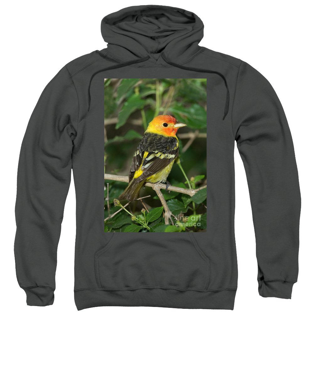 Animal Sweatshirt featuring the photograph Western Tanager by Anthony Mercieca