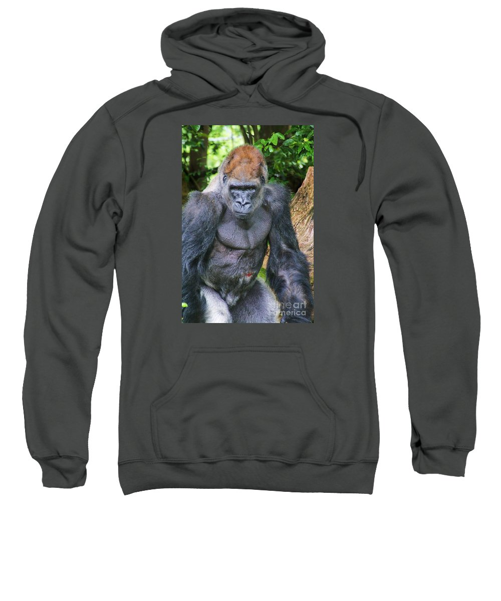Monkey Sweatshirt featuring the photograph What Do You Want by Chuck Hicks