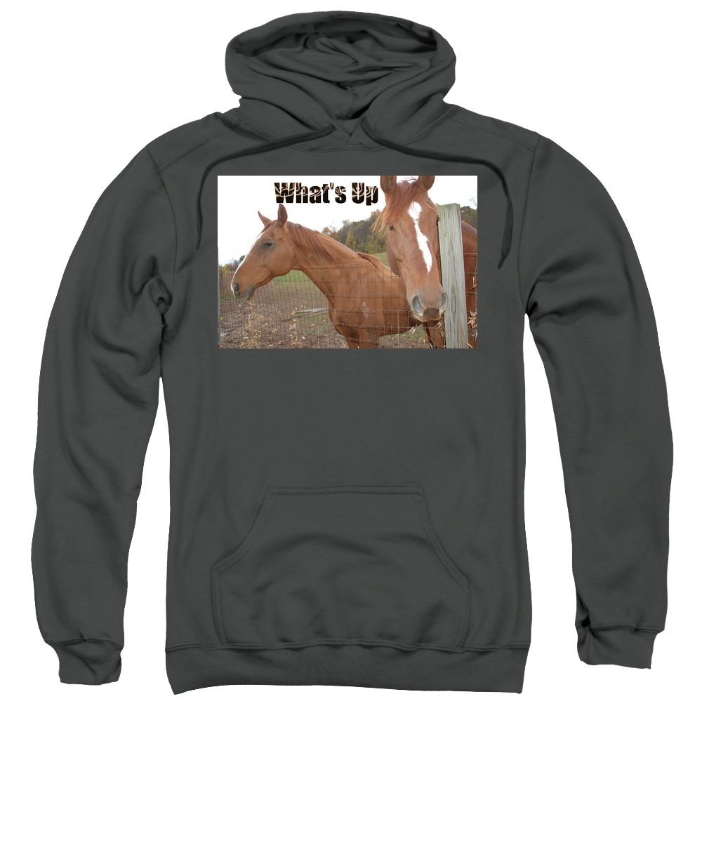 Horse Sweatshirt featuring the photograph What's Up by Aimee L Maher ALM GALLERY