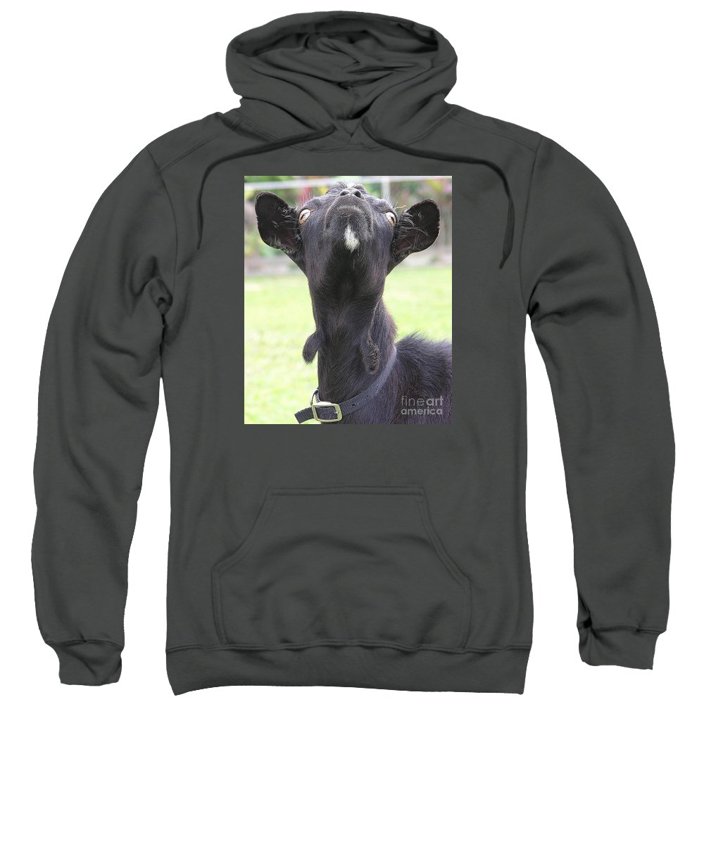 Goat Sweatshirt featuring the photograph Whats Up by Mary Deal