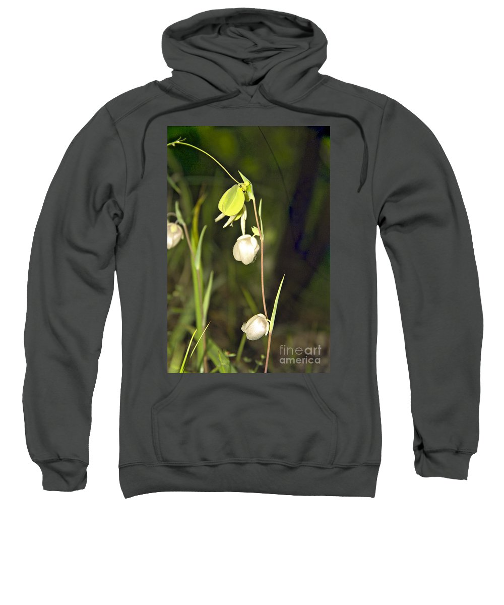 Wildflowers; Globes; Nature; Green; White Sweatshirt featuring the photograph Whispers by Kathy McClure
