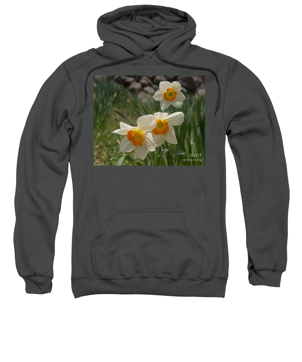 Daffodil Sweatshirt featuring the photograph White Daffies by Ray Konopaske