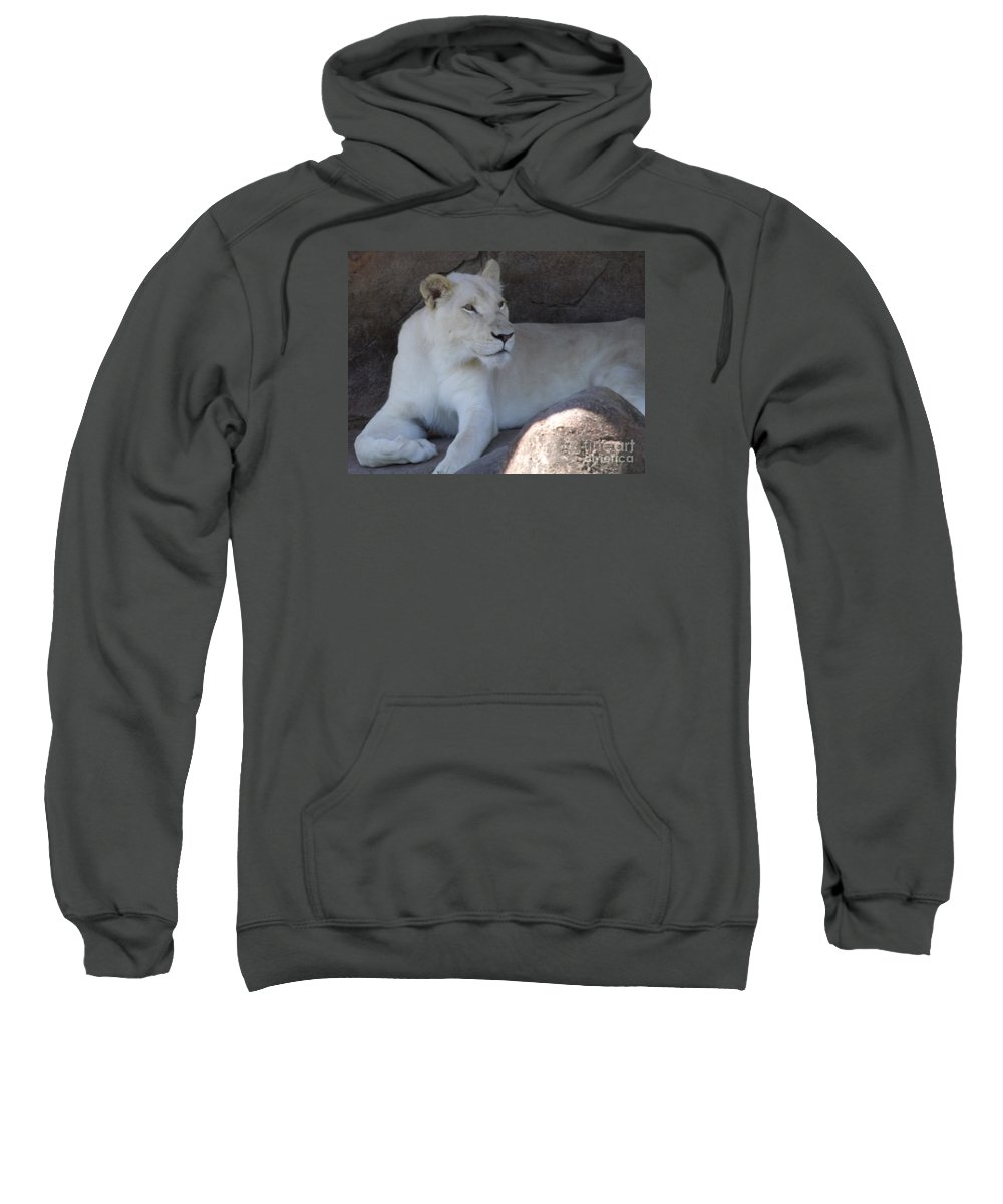 Lion Sweatshirt featuring the photograph White Lion Looking Proud by Lingfai Leung