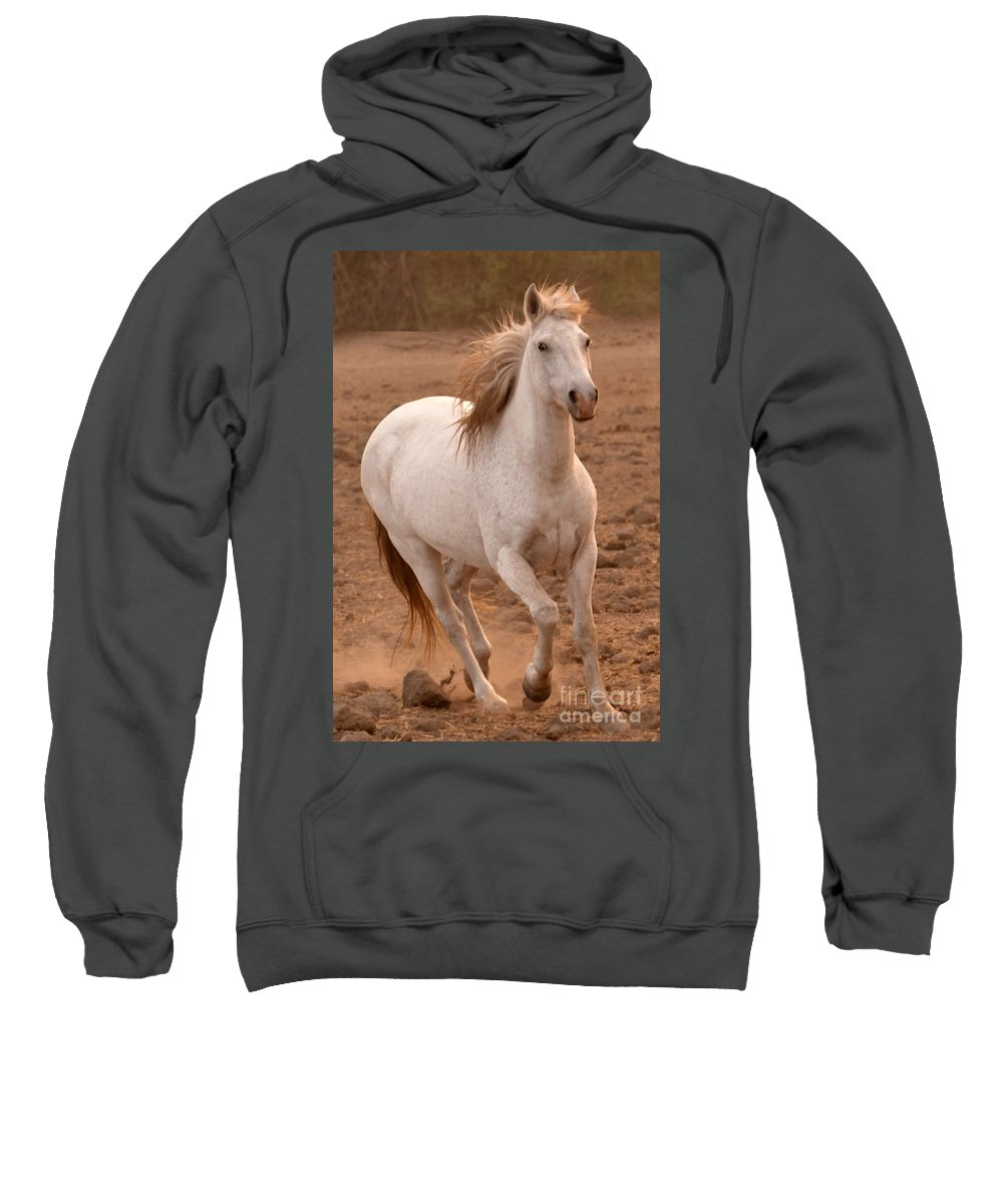 Rtf Ranch Sweatshirt featuring the photograph White Mare Approaches Number One Close Up Brighter by Heather Kirk
