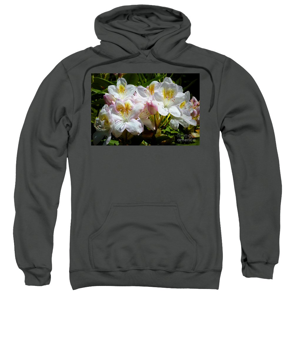 Rhododendron Sweatshirt featuring the photograph White Rhododendron In Sunlight by Carol Groenen