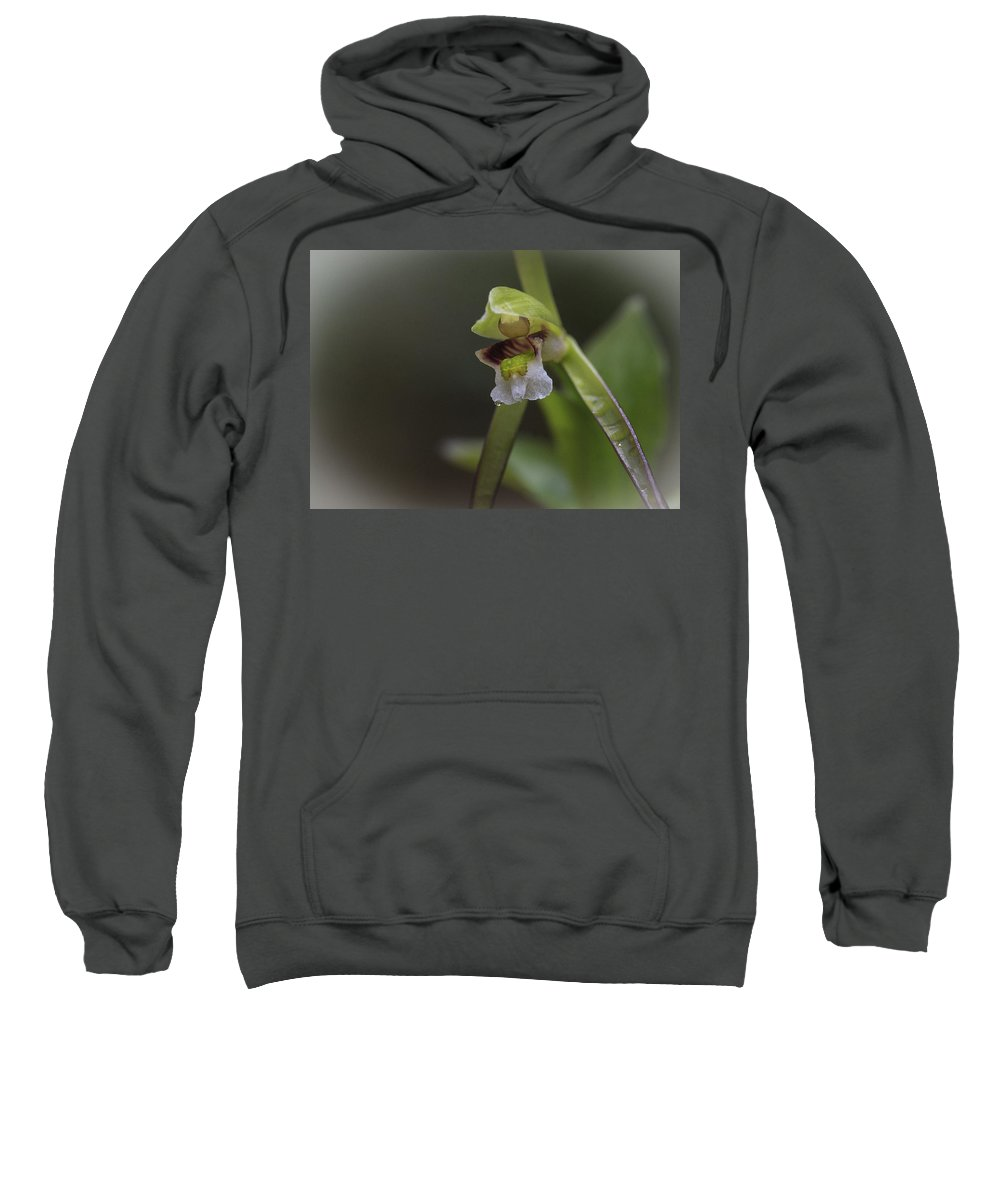 Flower Sweatshirt featuring the photograph Whorled Pogonia by Jack R Perry