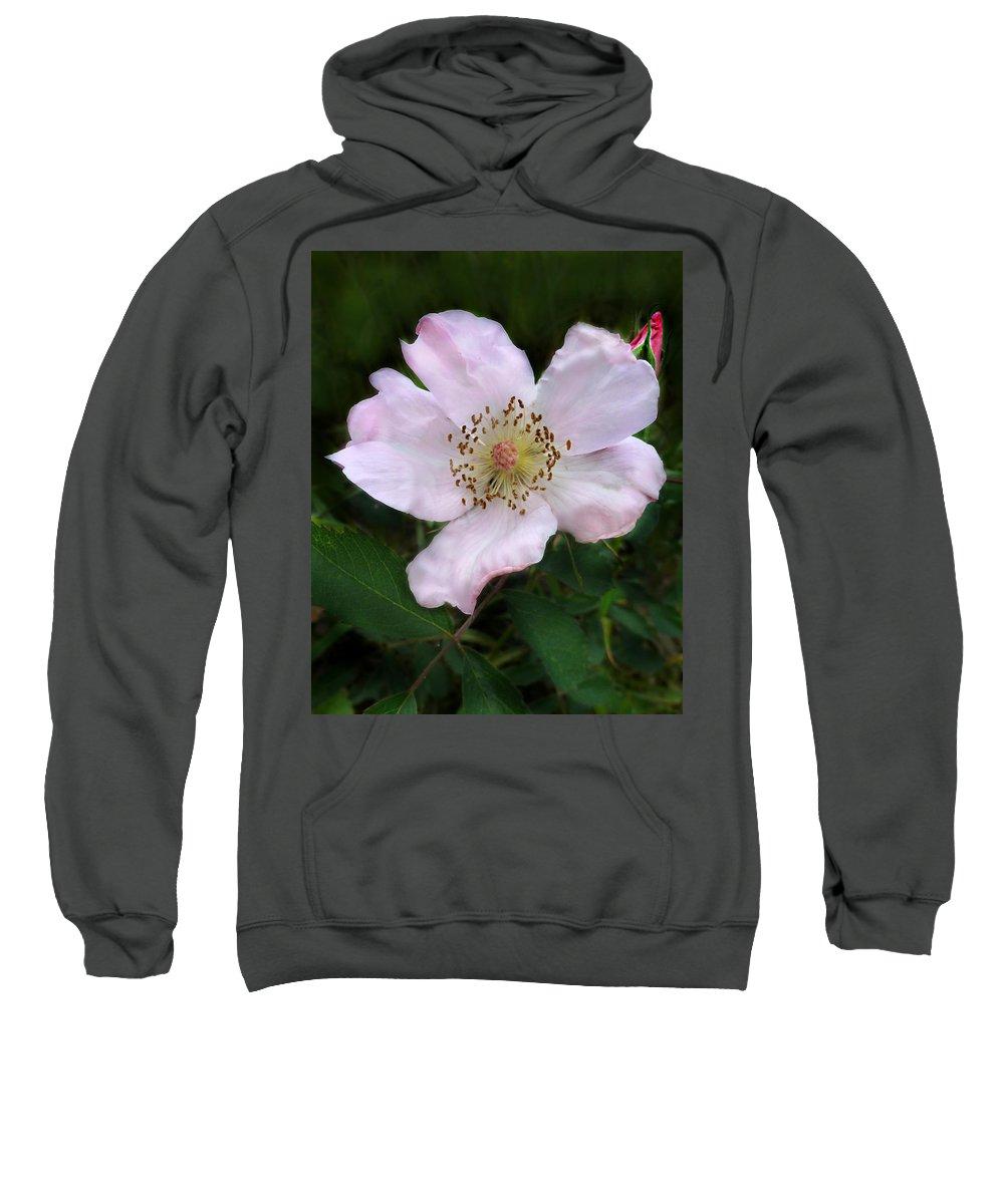 Rosa Carolina Sweatshirt featuring the photograph Wild Carolina Rose by William Tanneberger