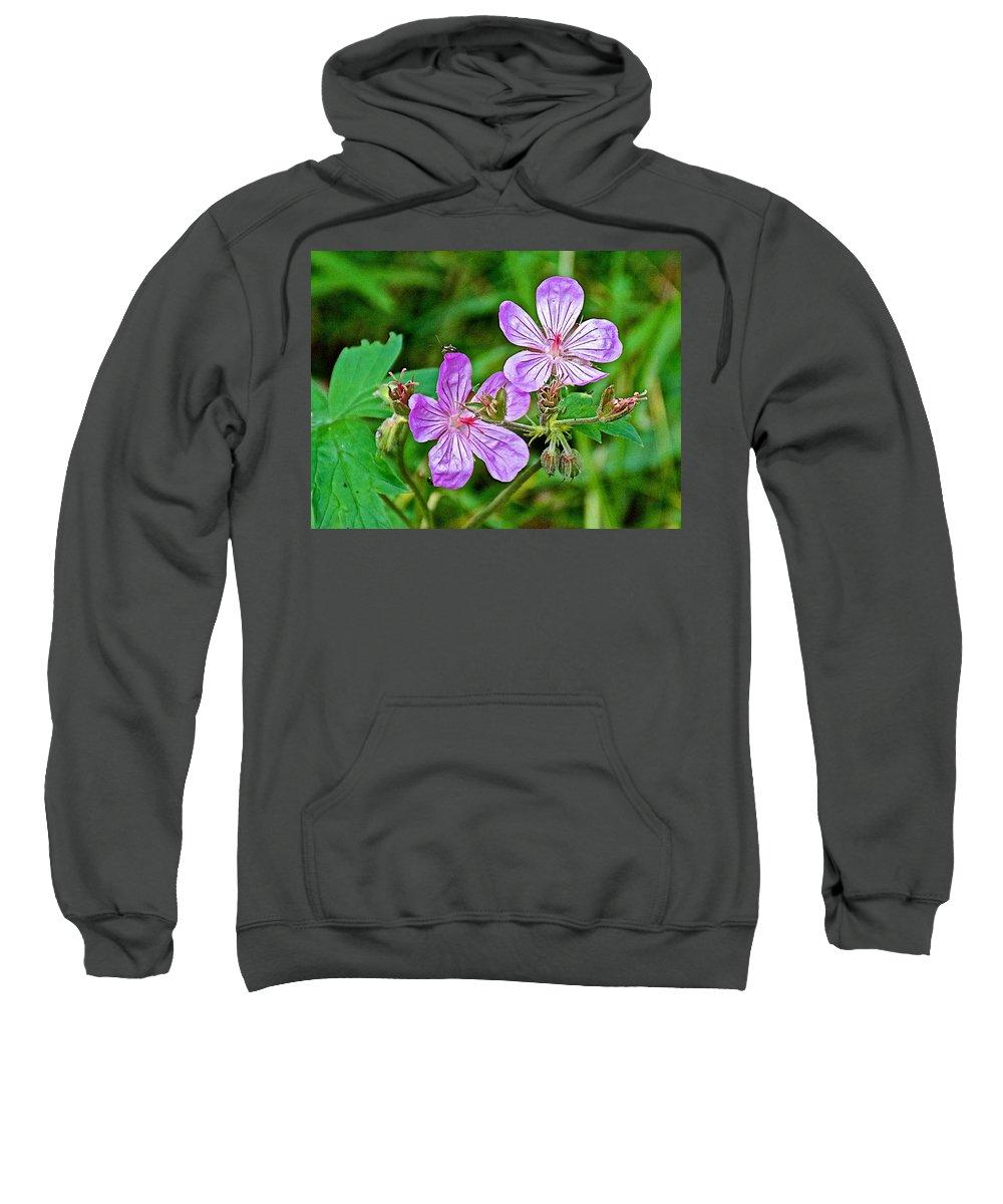Wild Geranium On Trail To Swan Lake In Grand Teton National Park Sweatshirt featuring the photograph Wild Geranium On Trail To Swan Lake In Grand Teton National Park-wyoming by Ruth Hager