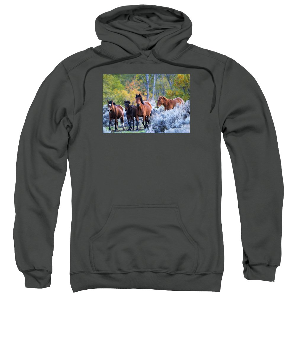 Mustangs Sweatshirt featuring the photograph Wild Mustang Autumn by Mike Dawson