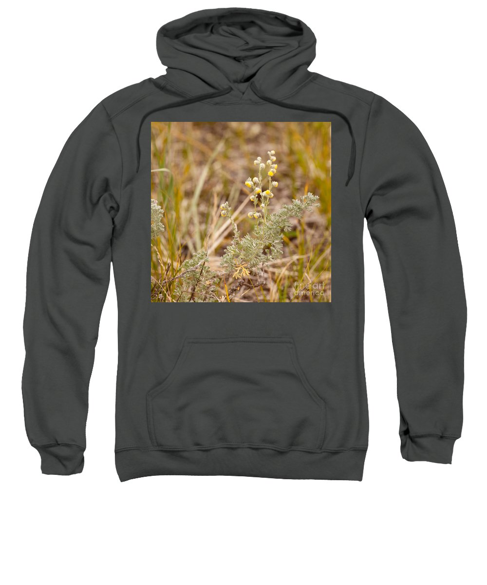 Aromatic Sweatshirt featuring the photograph Wild Sage Wormwood Artemisia Figida Yellow Flower by Stephan Pietzko
