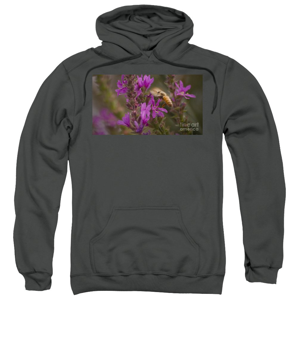 Flying Sweatshirt featuring the photograph Wings by Andrea Goodrich