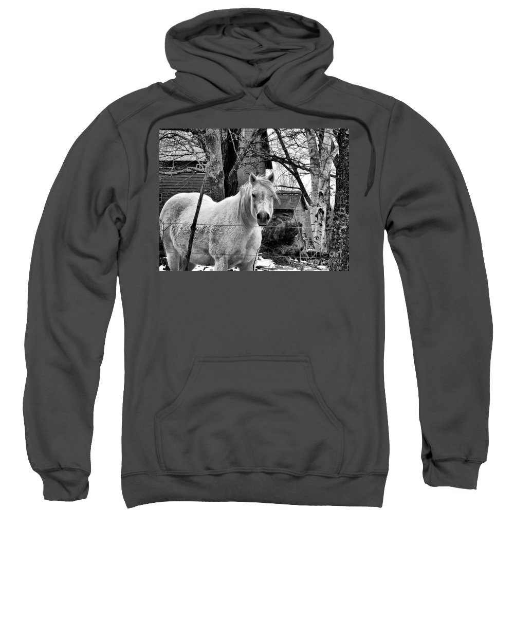 Horse Sweatshirt featuring the photograph Winking by Nancie DeMellia