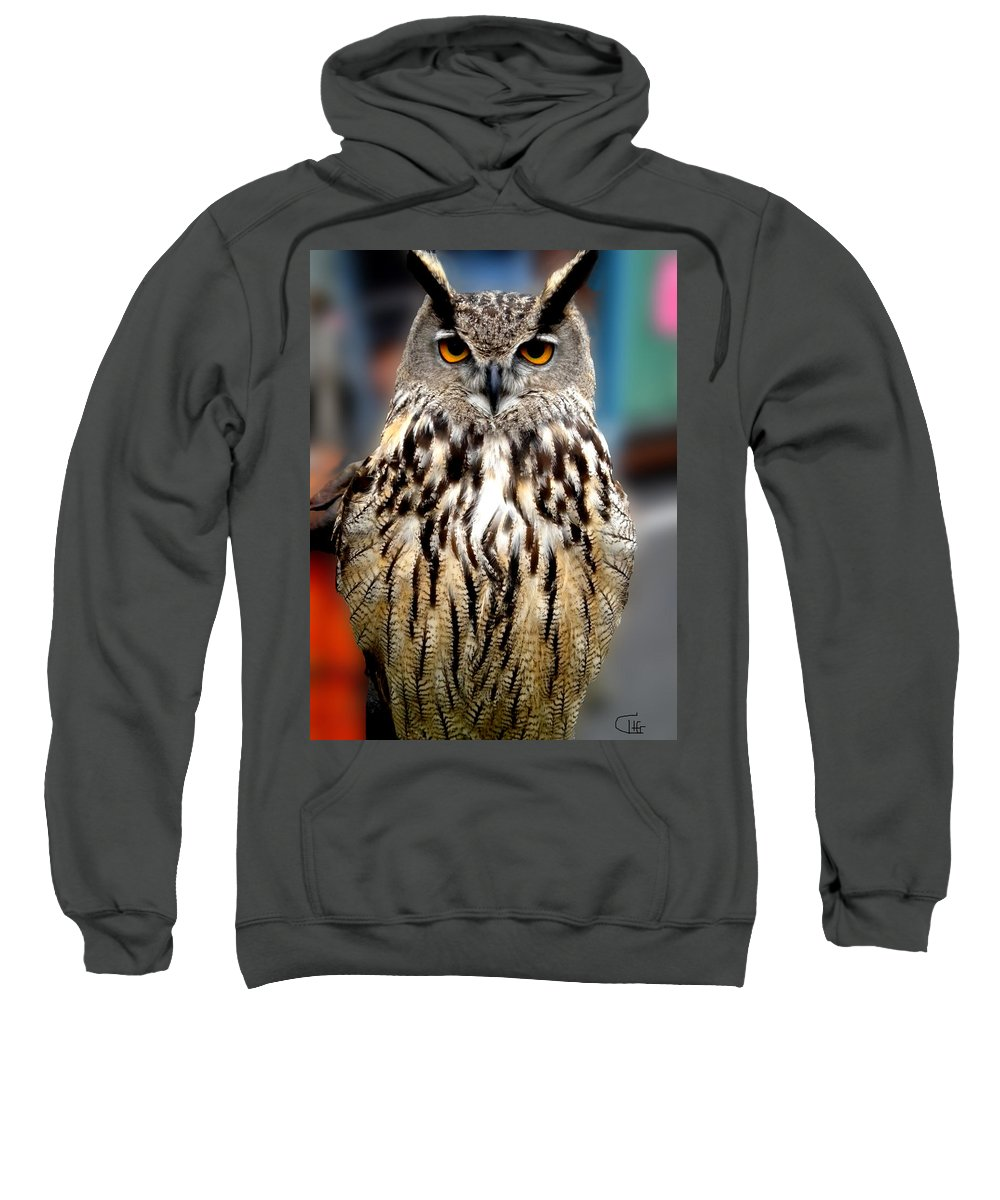 Colette Sweatshirt featuring the photograph Wise Forest Mountain Owl Spain by Colette V Hera Guggenheim