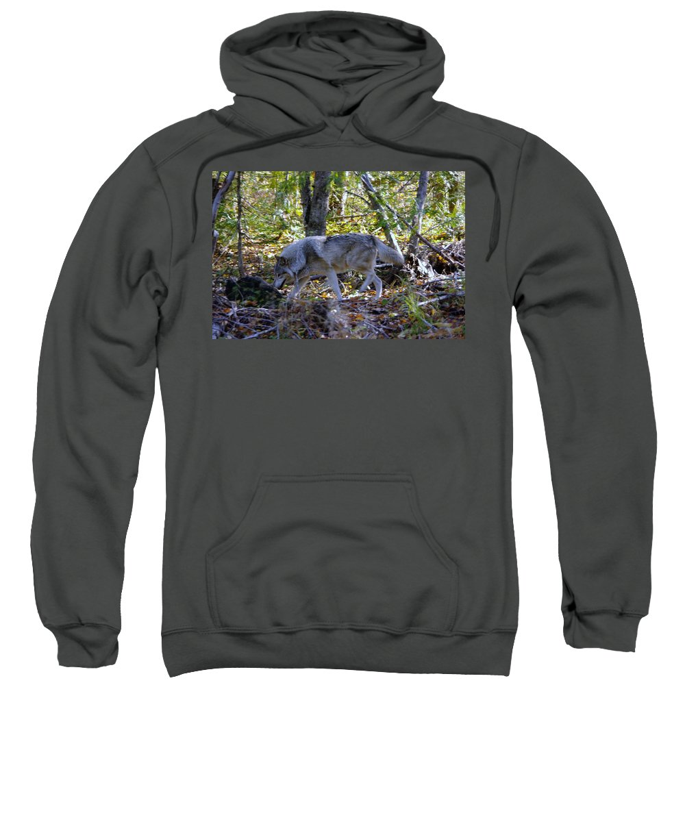 Wolf Sweatshirt featuring the photograph Wolf In The Woods by Jeff Swan