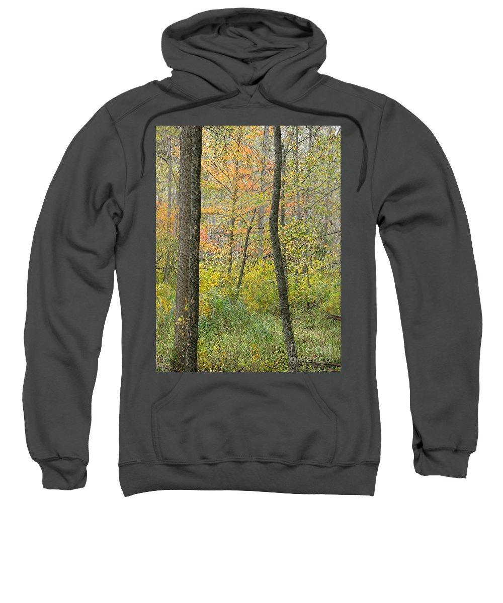 Autumn Sweatshirt featuring the photograph Woodland Interior by Ann Horn