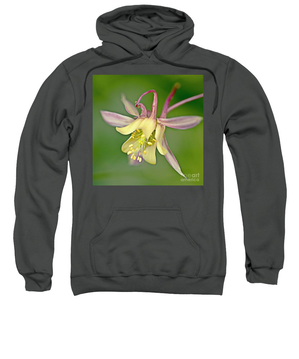 Aquilegia Sweatshirt featuring the photograph Yellow Aquilegia Bloom by Heiko Koehrer-Wagner