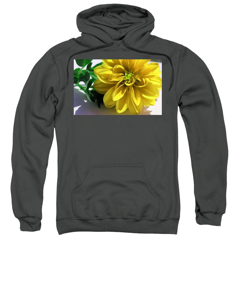 Yellow Dahlia Closeup Sweatshirt featuring the photograph Yellow Dahlia Closeup by Barbara Griffin