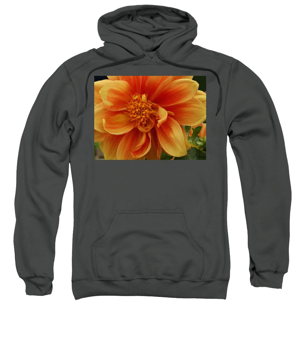 Yellow-orange Dahlia Sweatshirt featuring the painting Yellow Orange Dahlia by Ellen Henneke