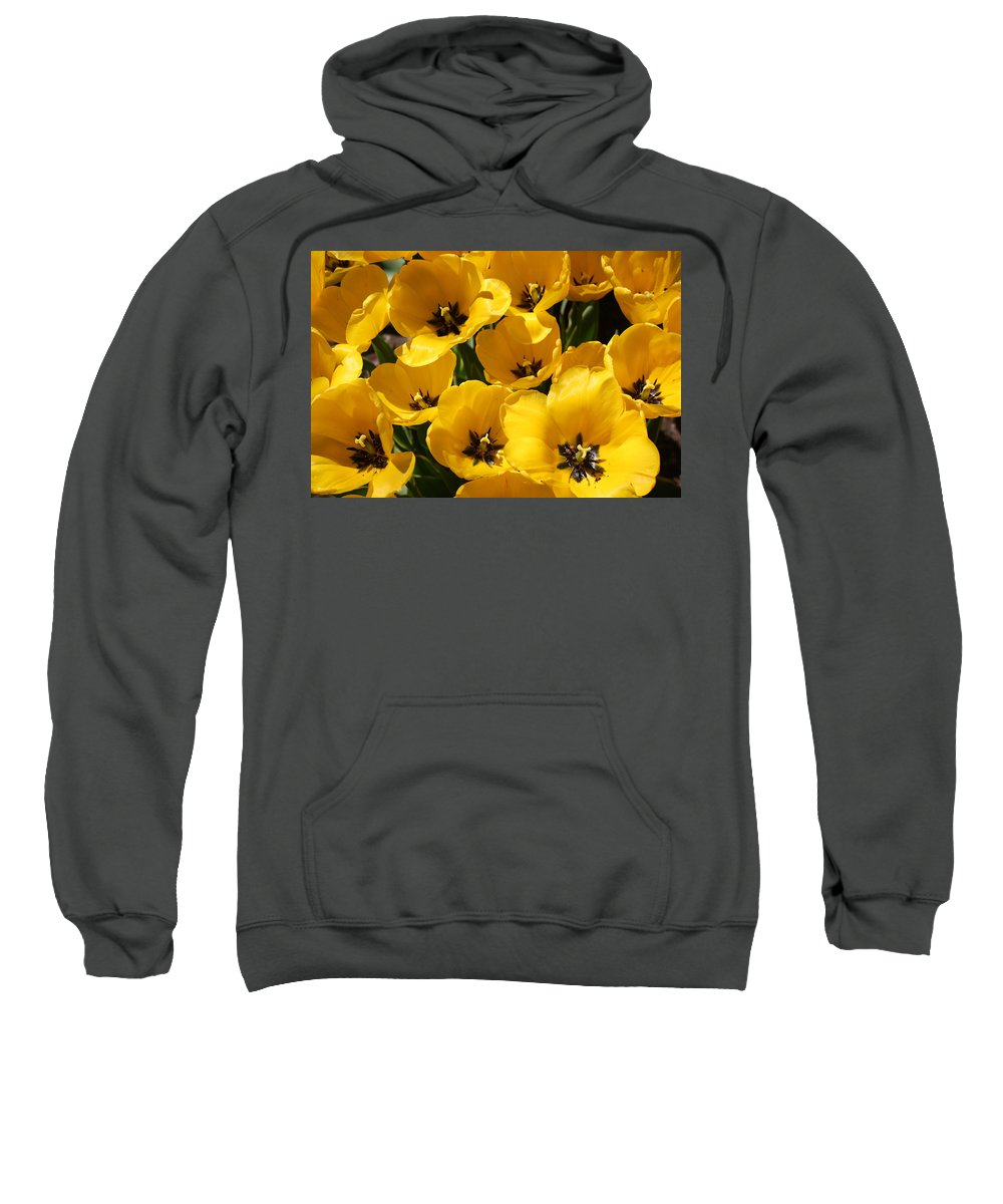 Tulips Sweatshirt featuring the photograph Golden Tulips In Full Bloom by Dora Sofia Caputo Photographic Design and Fine Art