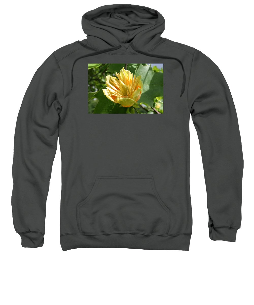 Tulip.tuliptree Sweatshirt featuring the photograph Yellow Tuliptree Flower by Christiane Schulze Art And Photography
