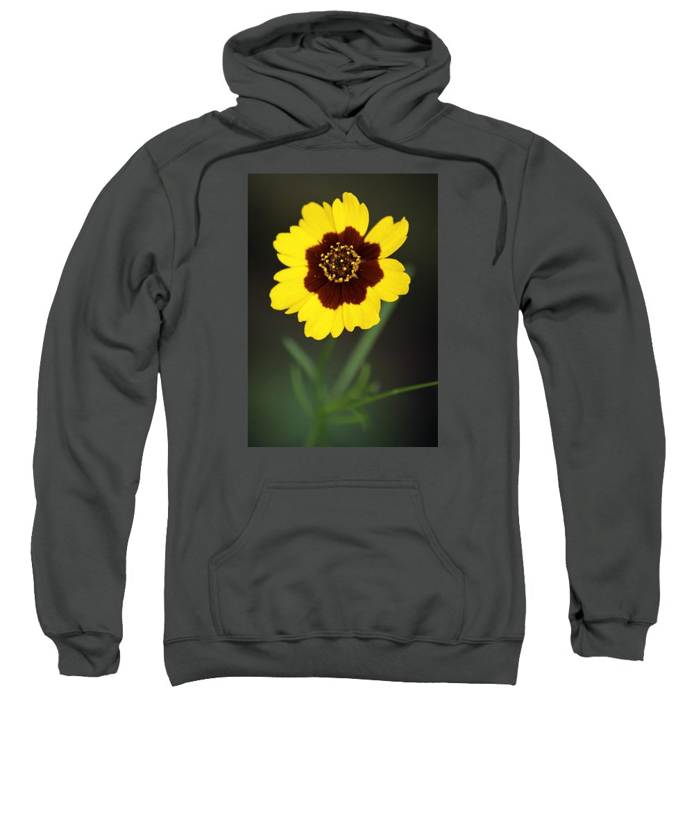 Color Digital Photography Sweatshirt featuring the photograph Yellow Wild Flower by Paul Shefferly