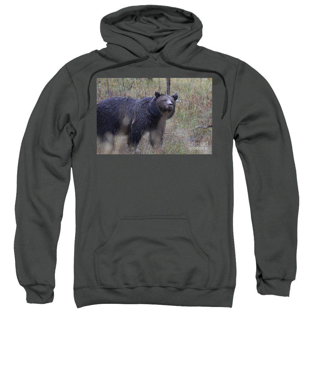 Grizzly Sweatshirt featuring the photograph Yellowstone Grizzly by Deanna Cagle