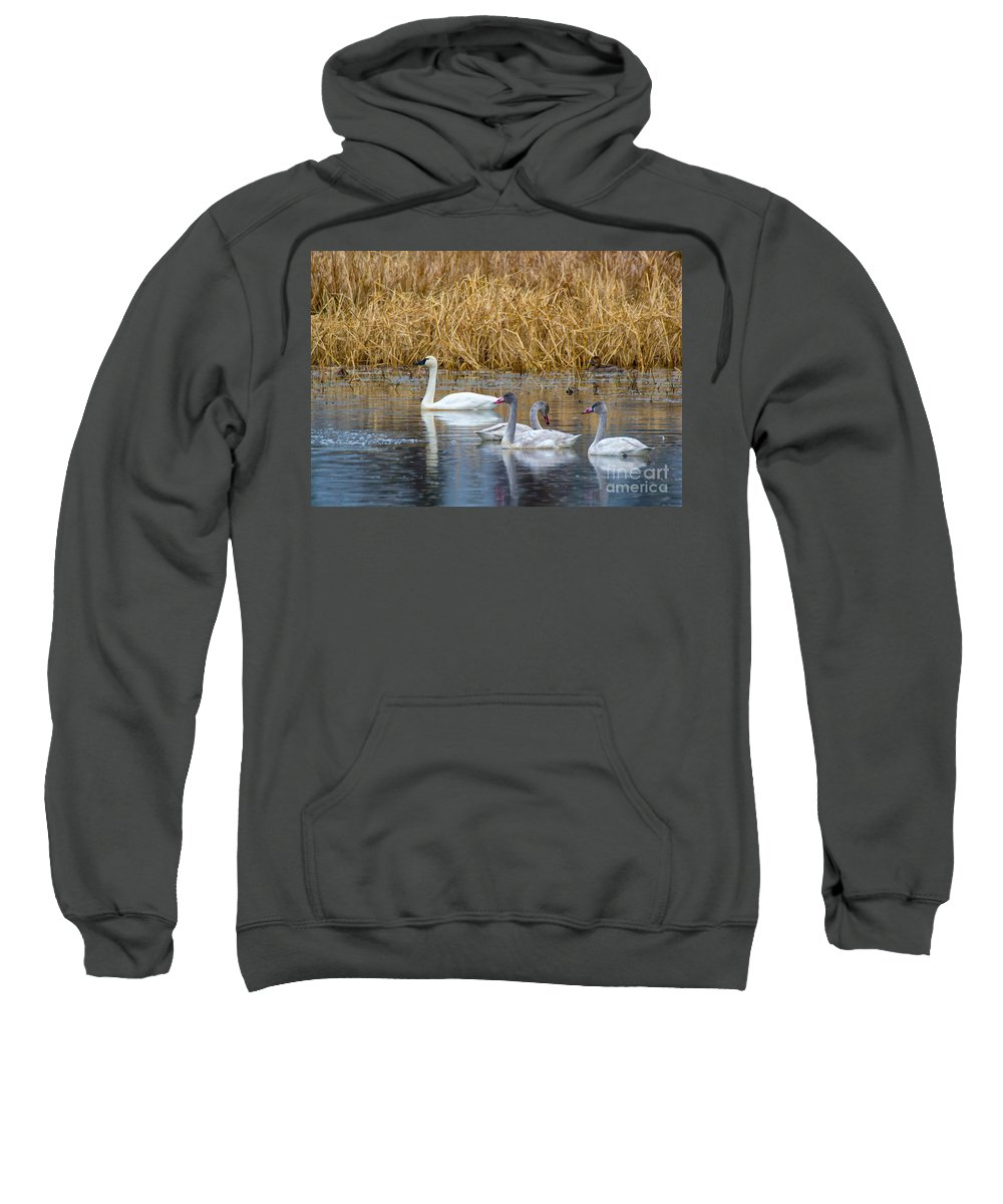 Young Sweatshirt featuring the photograph Young And Old by Scott Hervieux