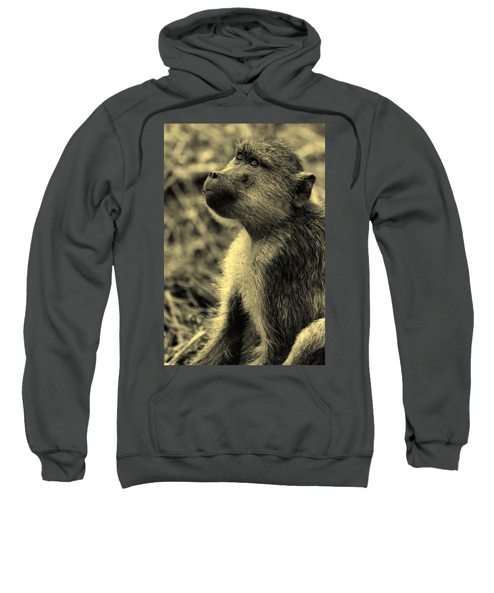 Baboon Sweatshirt featuring the photograph Young Baboon In Black And White by Amanda Stadther