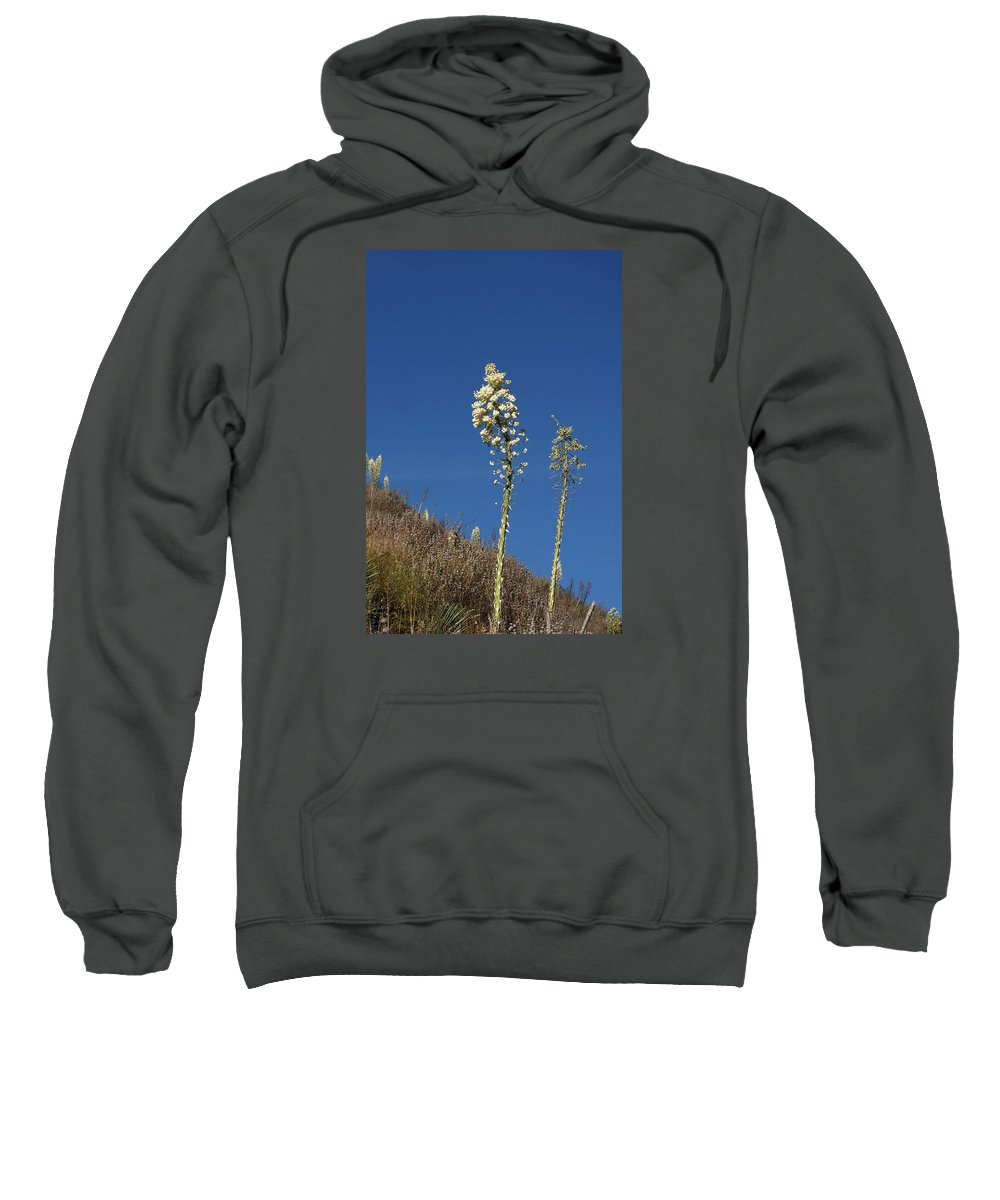 Yucca Sweatshirt featuring the photograph Yucca by Art Block Collections