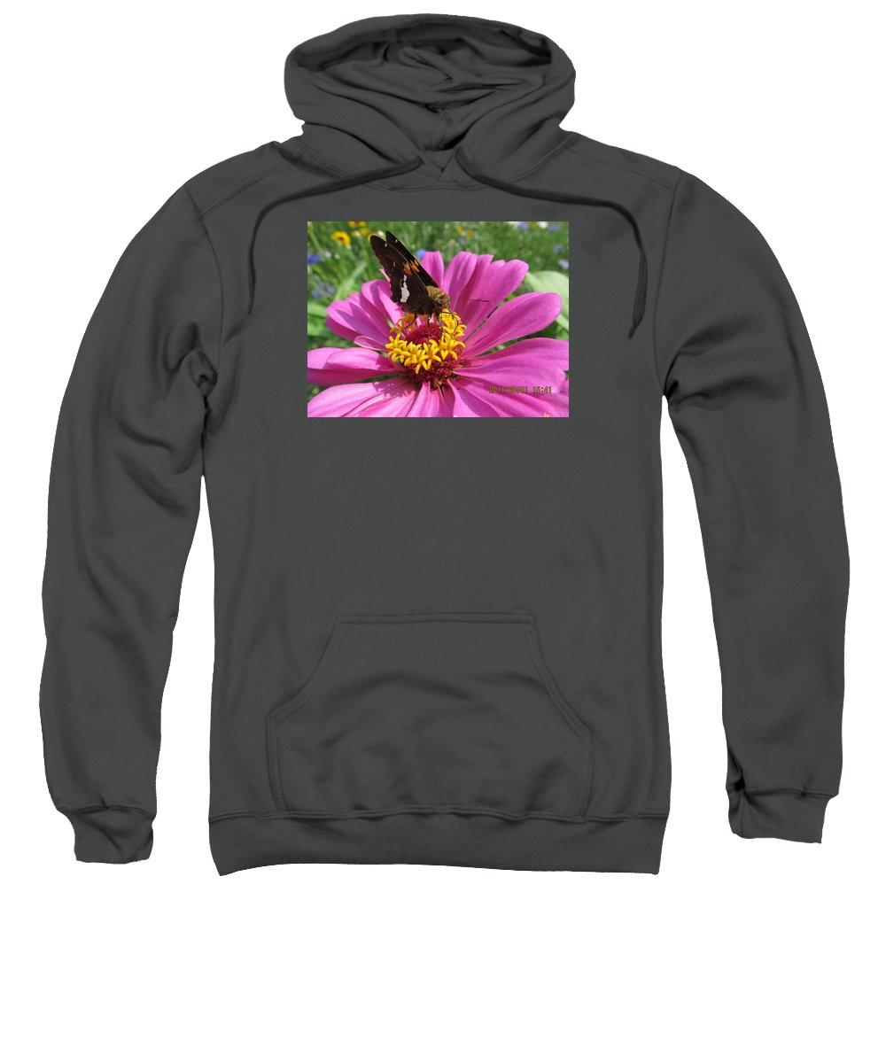 Flowers Sweatshirt featuring the photograph Butterfly On Pink Flower by Tina M Wenger