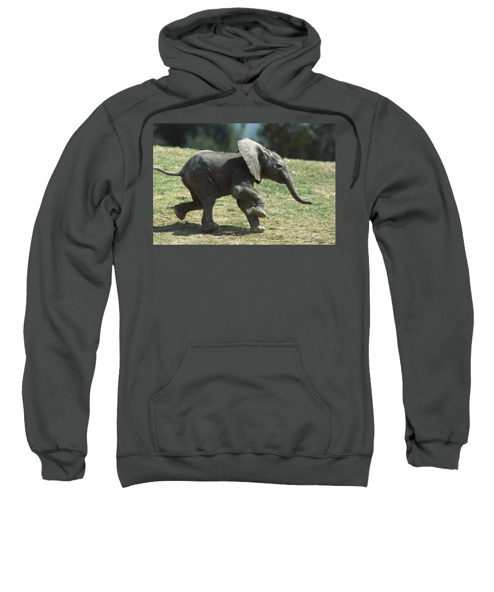 Baby Sweatshirt featuring the photograph African Elephant Loxodonta Africana by San Diego Zoo
