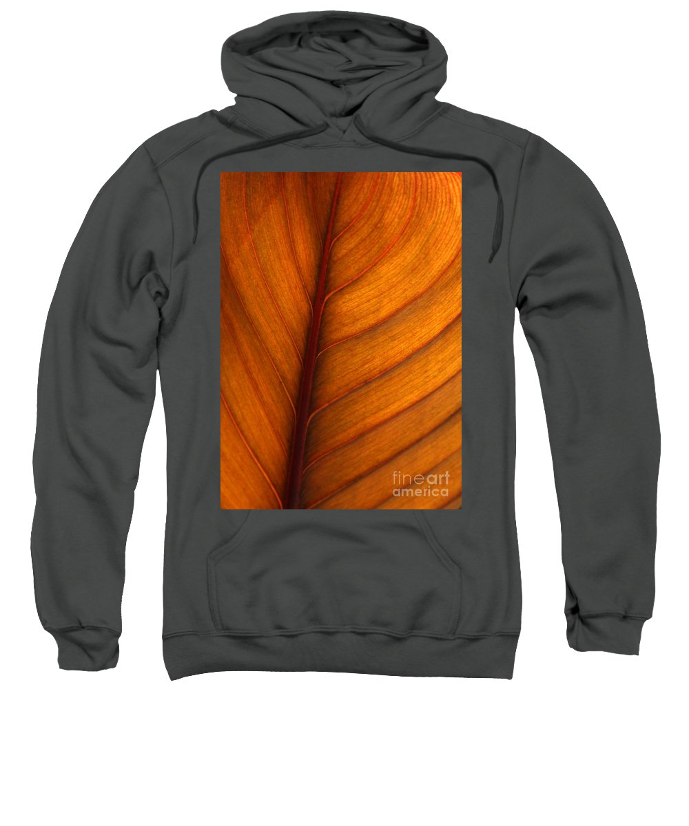 Leaf Sweatshirt featuring the photograph Backlit Leaf by Sabrina L Ryan