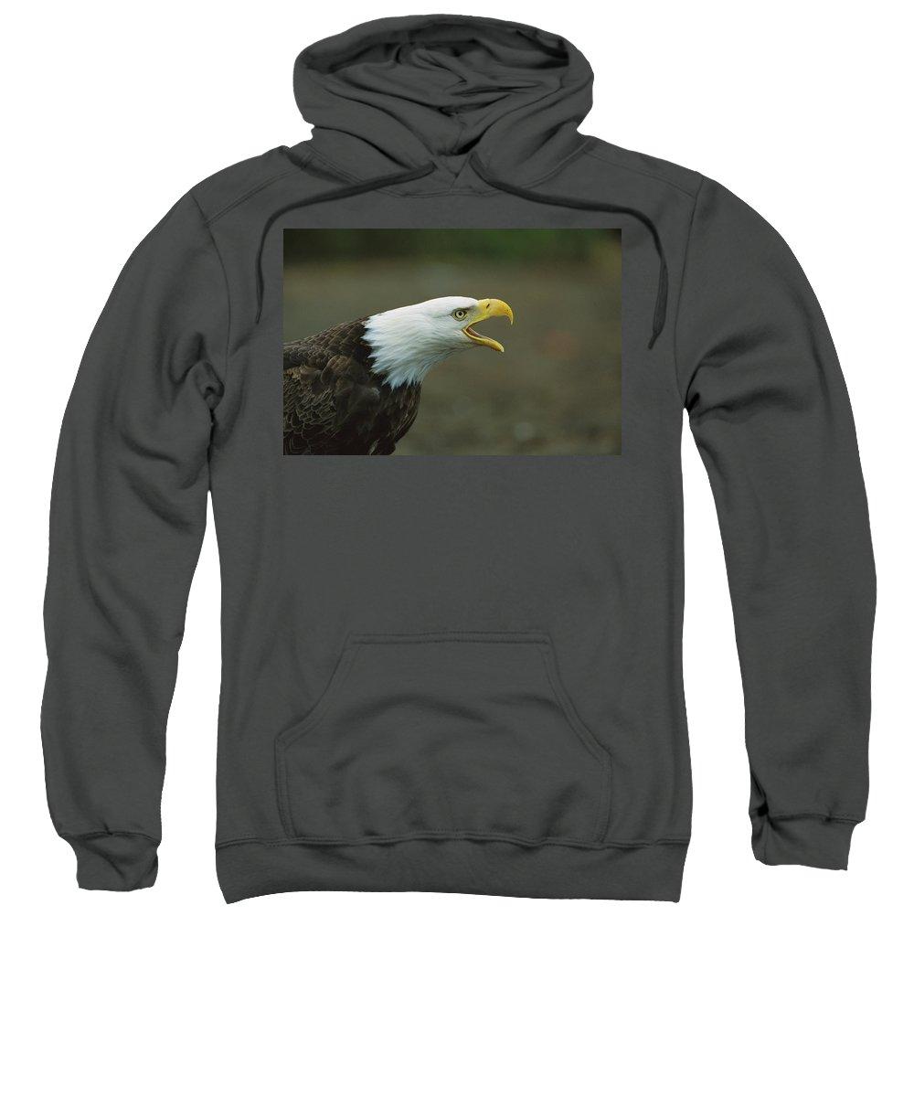 Mp Sweatshirt featuring the photograph Bald Eagle Haliaeetus Leucocephalus by Suzi Eszterhas