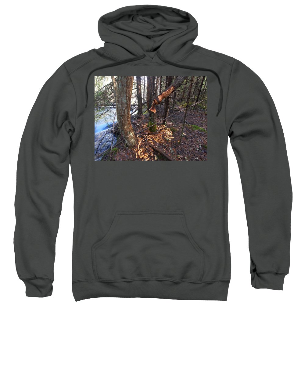 Lehtokukka Sweatshirt featuring the photograph Beaver Marks by Jouko Lehto