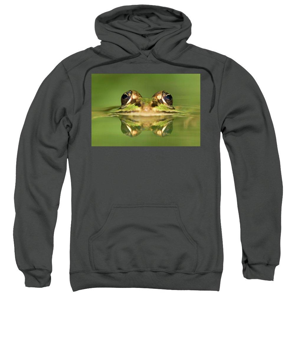 Mp Sweatshirt featuring the photograph Edible Frog Rana Esculenta by Ingo Arndt