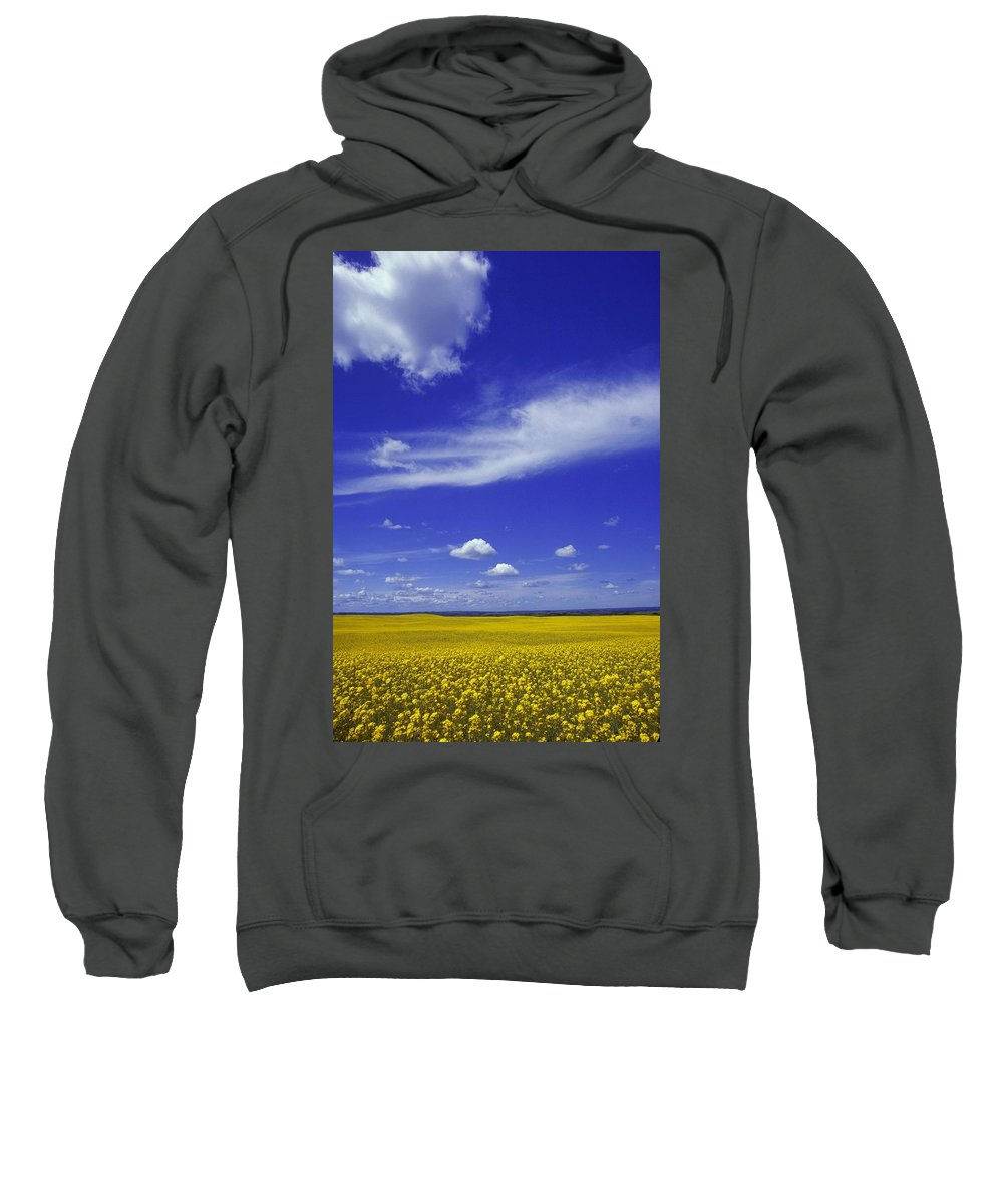 Agriculture Sweatshirt featuring the photograph Field Of Canola by Don Hammond