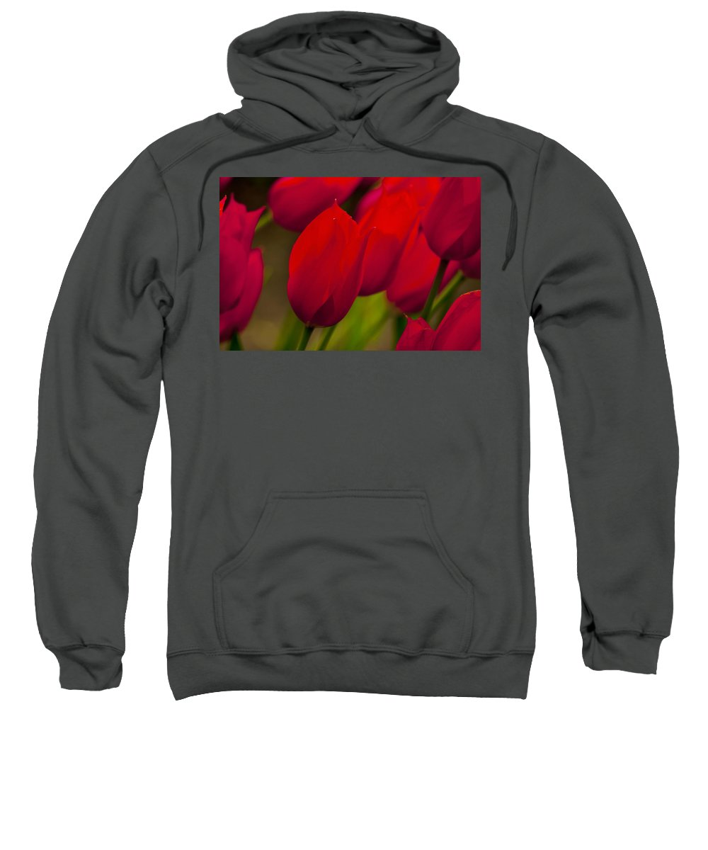 Tulip Sweatshirt featuring the photograph Red Tulips In Holland by Beth Riser