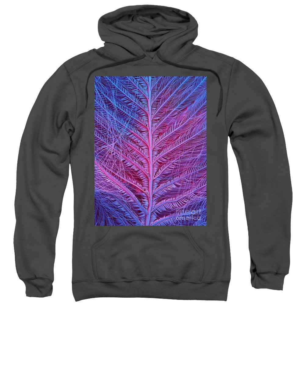 Fauna Sweatshirt featuring the photograph Sem Of Eastern Bluebird Feathers by Ted Kinsman