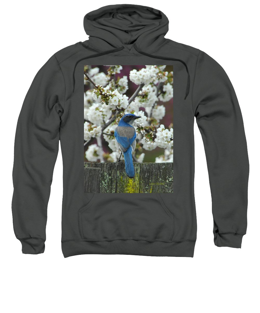 Blue Jay Sweatshirt featuring the photograph Spring Has Sprung by Donna Blackhall