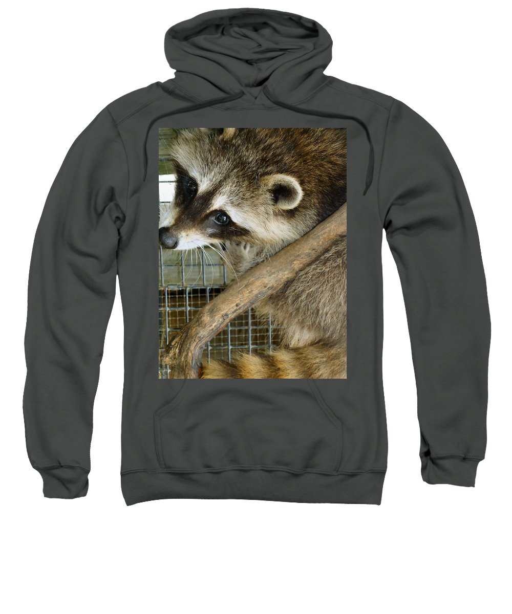 Raccoon Sweatshirt featuring the photograph Strike A Pose by Art Dingo