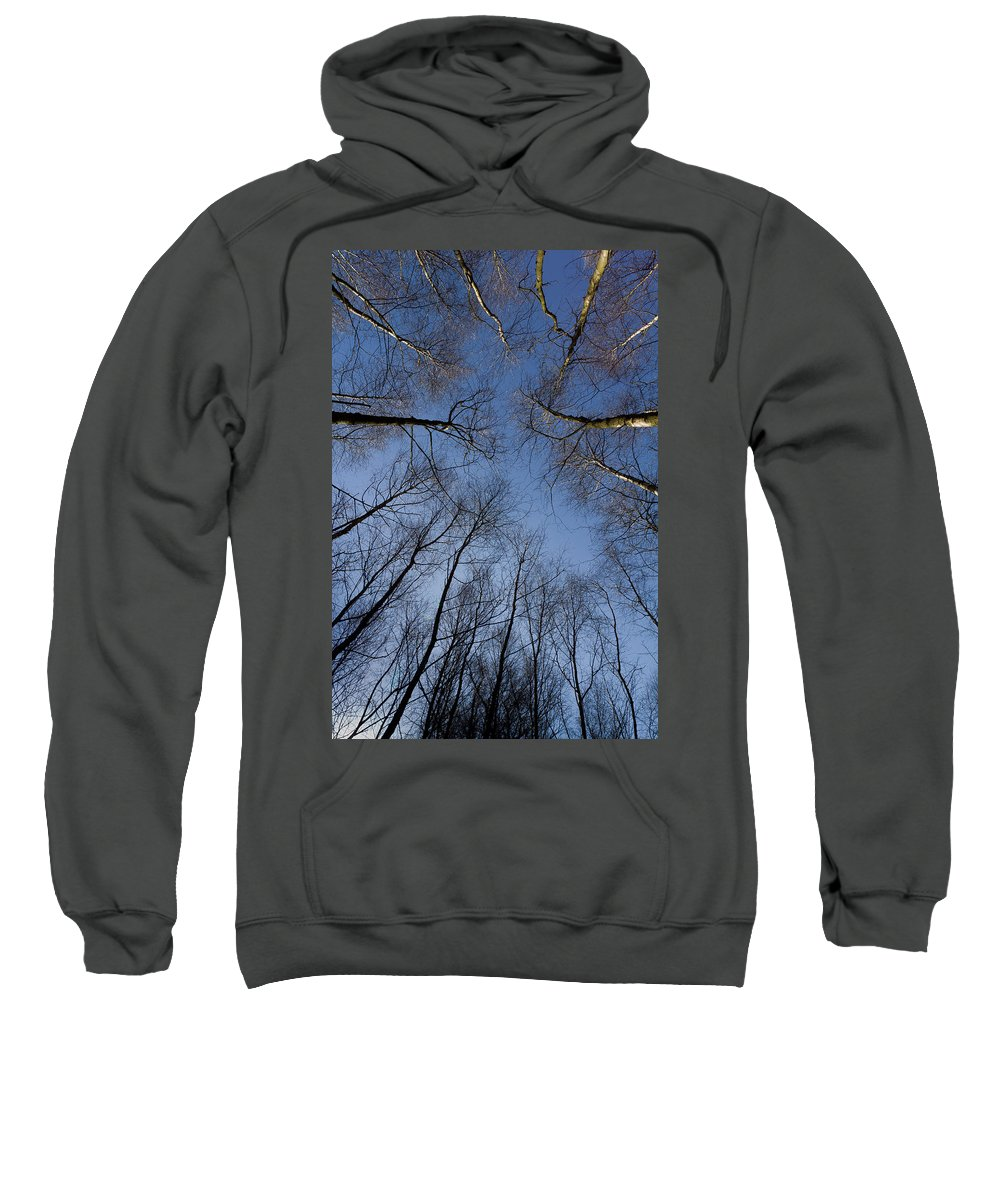 Tree Sweatshirt featuring the photograph Trees In Epping Forest by David Pyatt