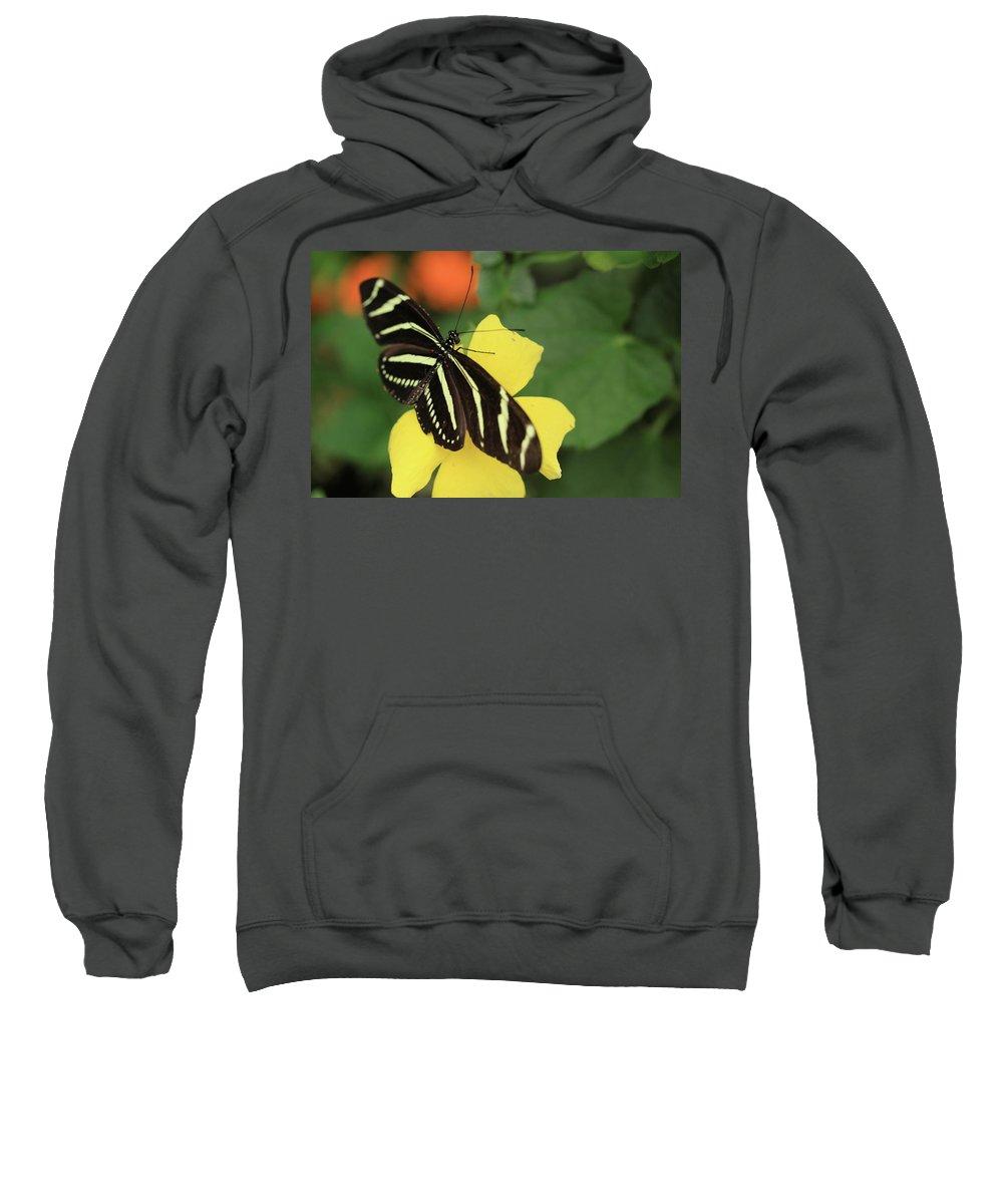 Flowers Sweatshirt featuring the photograph Zebra Longwing by Rick Berk