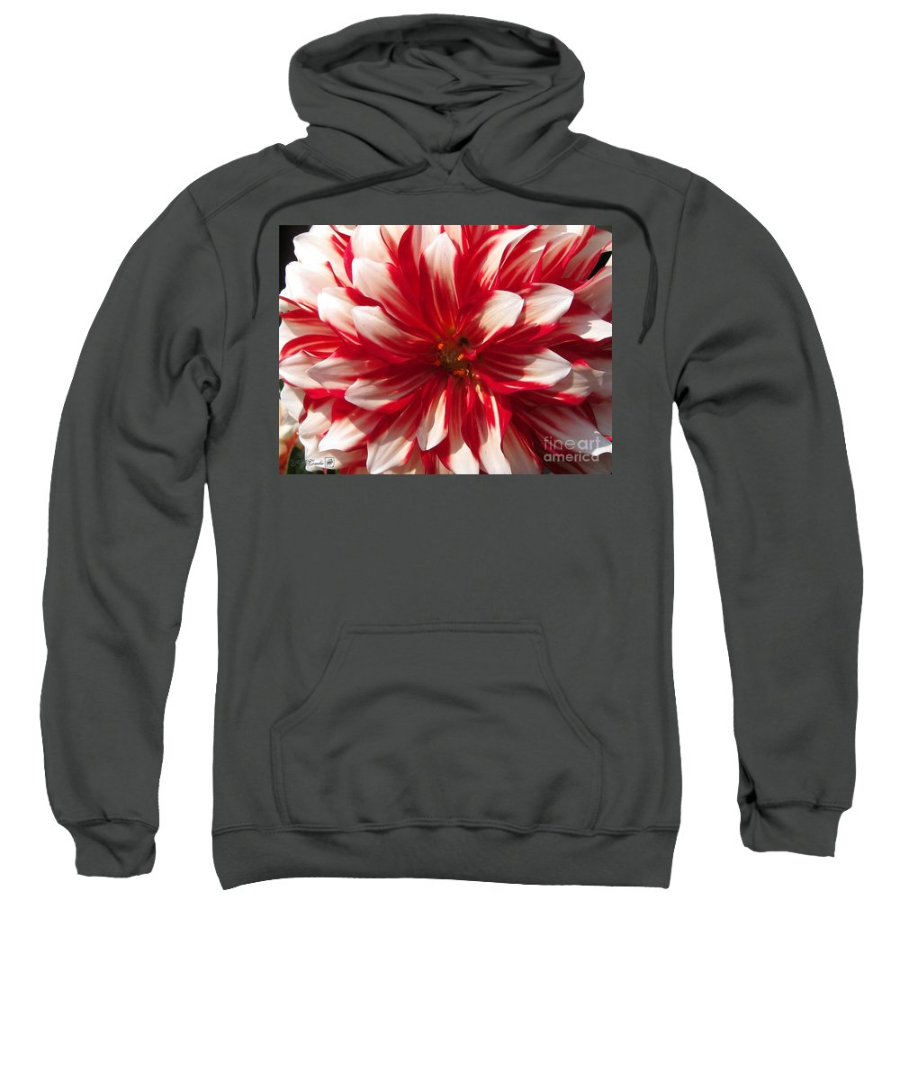 Mccombie Sweatshirt featuring the photograph Dahlia Named Myrtle's Brandy by J McCombie