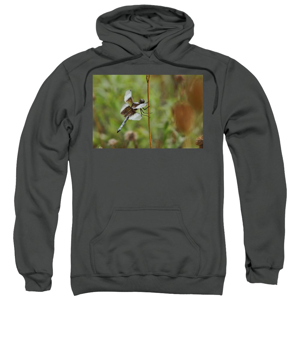 Dragonfly Sweatshirt featuring the photograph Dragonfly by Alan Hutchins